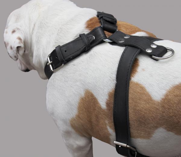 Genuine Leather Dog Harness  33