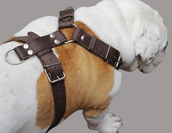 Genuine Leather Dog Harness  33