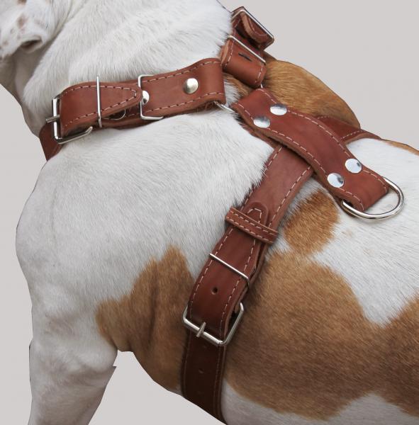 Genuine Leather Dog Harness